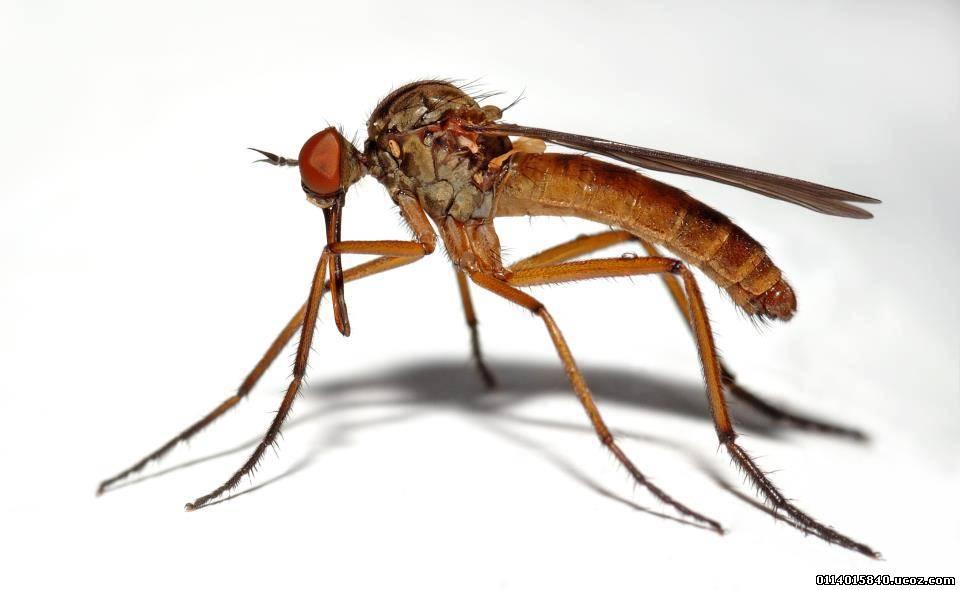 صورة صور حشرات , صورة للحشرات نايس