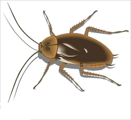 صور صور حشرات , صورة للحشرات نايس