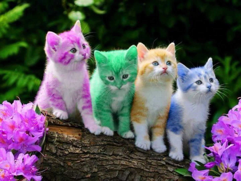 بالصور صور قطه , احلى قطط كيوت 1668 3