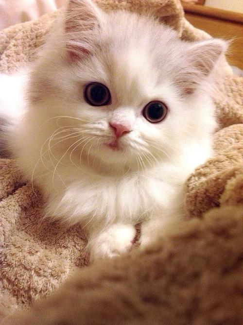 بالصور صور قطه , احلى قطط كيوت 1668 4