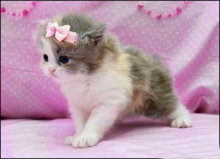 بالصور صور قطه , احلى قطط كيوت 1668 5