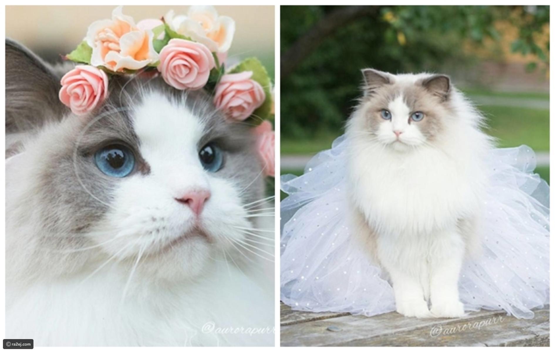 بالصور صور قطه , احلى قطط كيوت 1668 7