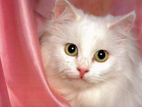 صوره صور قطه , احلى قطط كيوت