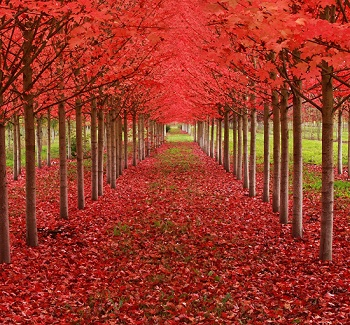 صورة صور اشجار , احلى اشجار متنوعه