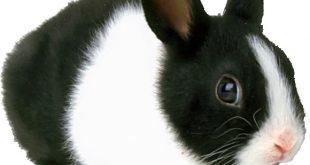 صوره صورة ارنب , اجمل صورة للارنب