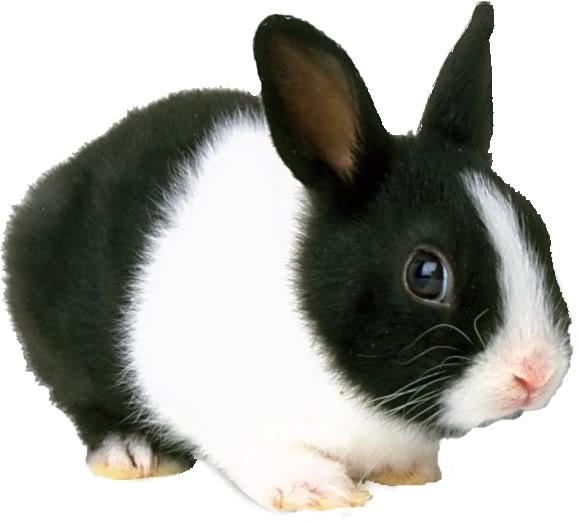صورة صورة ارنب , اجمل صورة للارنب