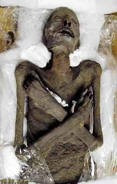 بالصور صور فرعون , جثه فرعون 1729 4