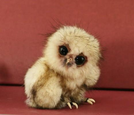 صور صور صغار الحيوانات , احلى صور للحيوان الصغير