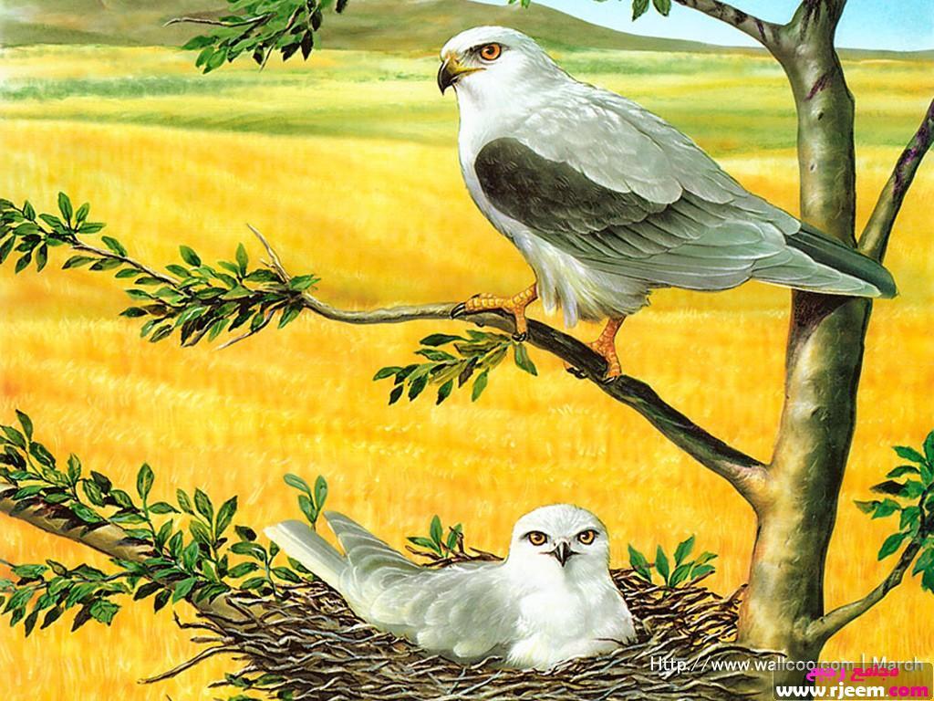 صورة صور طيور متحركه , اروع صور الطيور