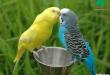 بالصور صور عصافير , احلى عصافير 1818 1 110x75