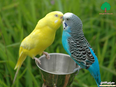 صوره صور عصافير , احلى عصافير