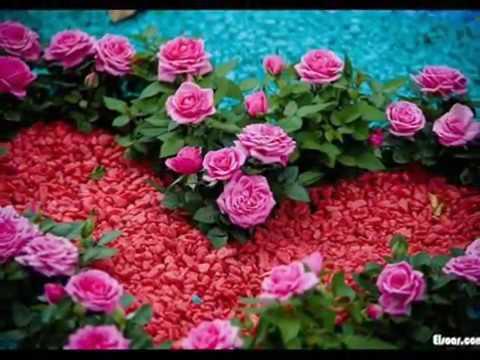 صور صور الورد , اجمل ورود باللون الاحمر