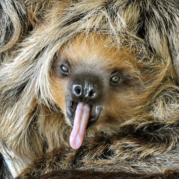 صورة صور حيوانات مضحكة , مجموعه حيوانات جميله