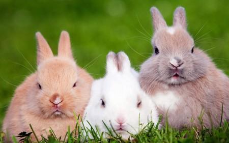 صور صور ارانب , صور ارنب كيوت