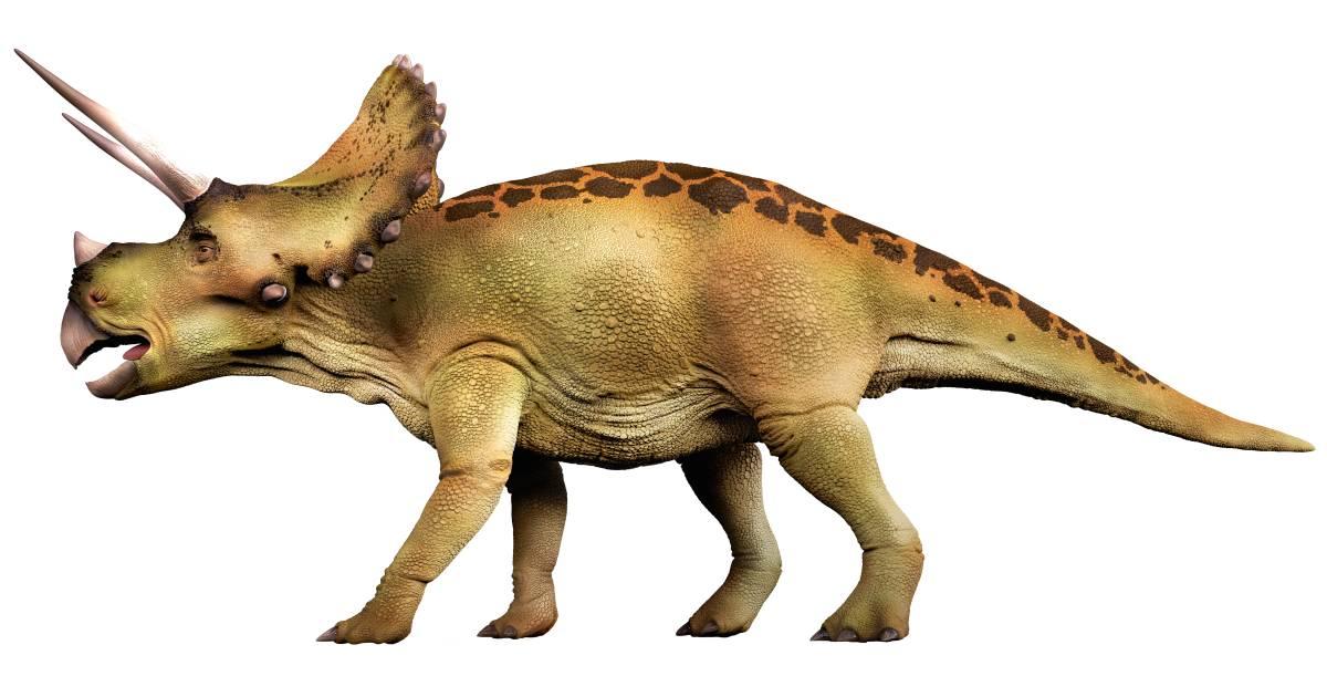 بالصور صور ديناصورات , صور ديناصور ضخم 1904 5