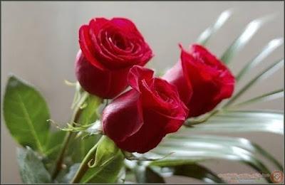 صورة صور زهور , صور زهور جديده