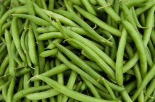 بالصور فوائد الفاصوليا الخضراء , اهمية تناول الفاصوليا الخضراء 4523 2 310x205