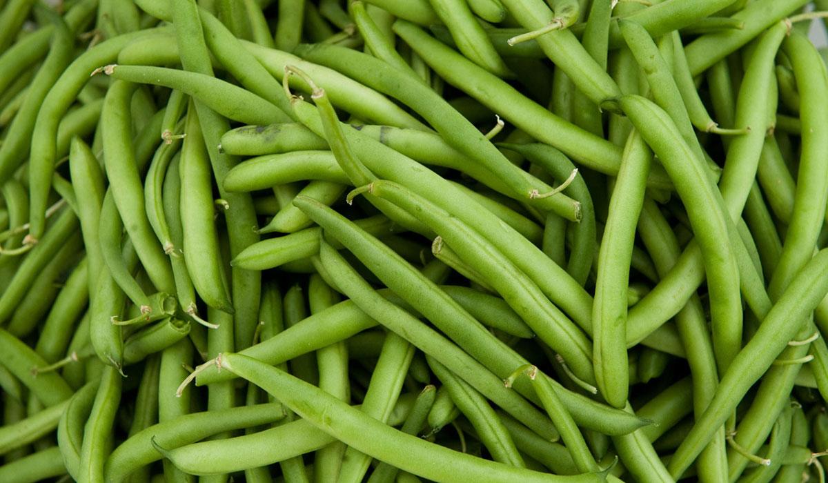 صوره فوائد الفاصوليا الخضراء , اهمية تناول الفاصوليا الخضراء