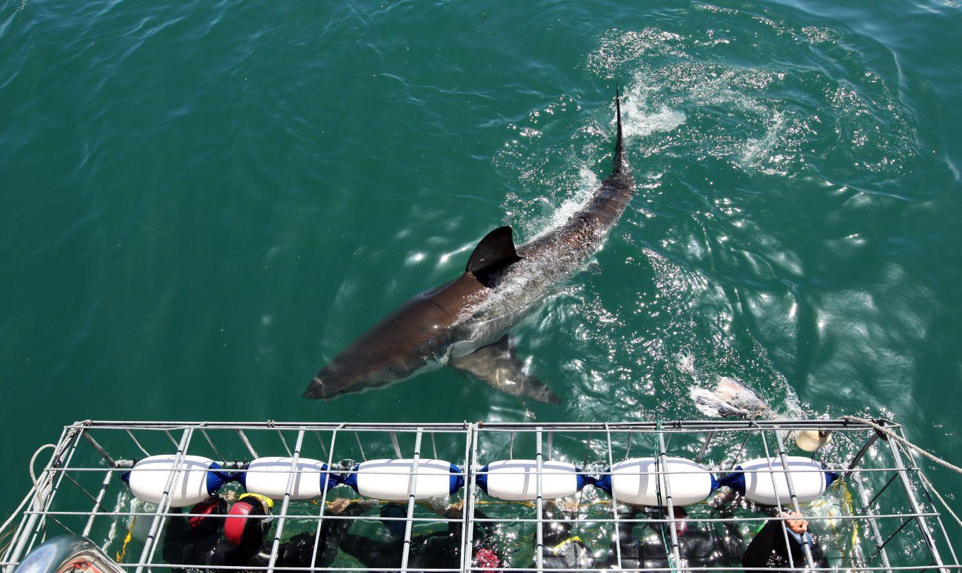 بالصور صور جنوب افريقيا , اماكن سياحية في جنوب افريقيا 910 5
