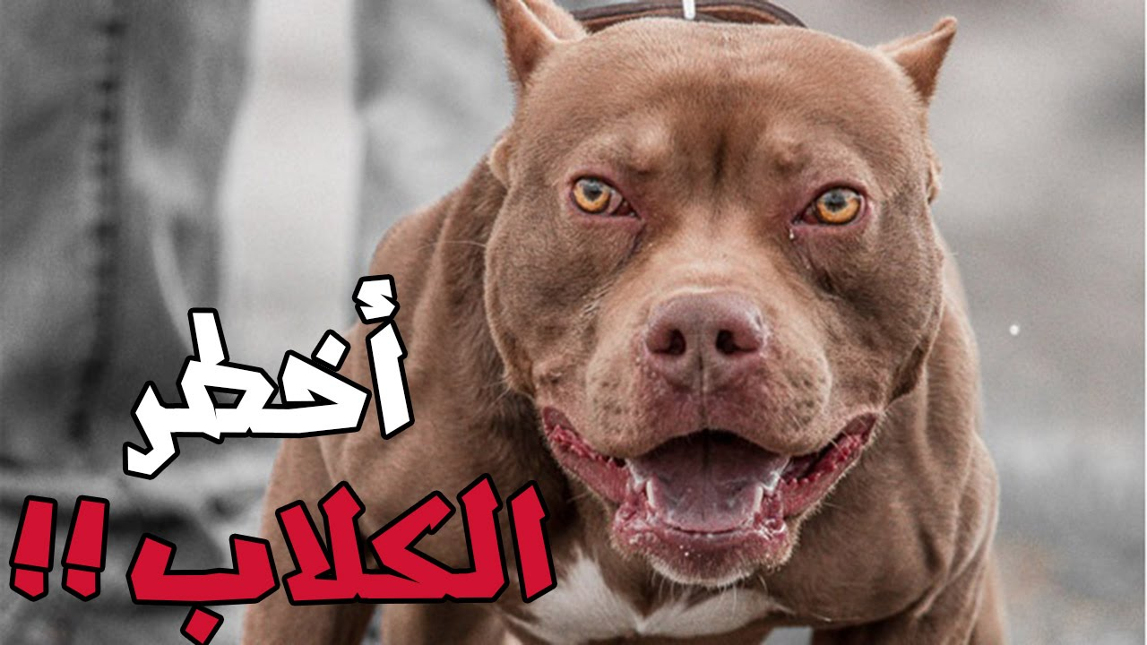 صورة اخطر كلاب العالم , شاهد اشرس نوع من الكلاب