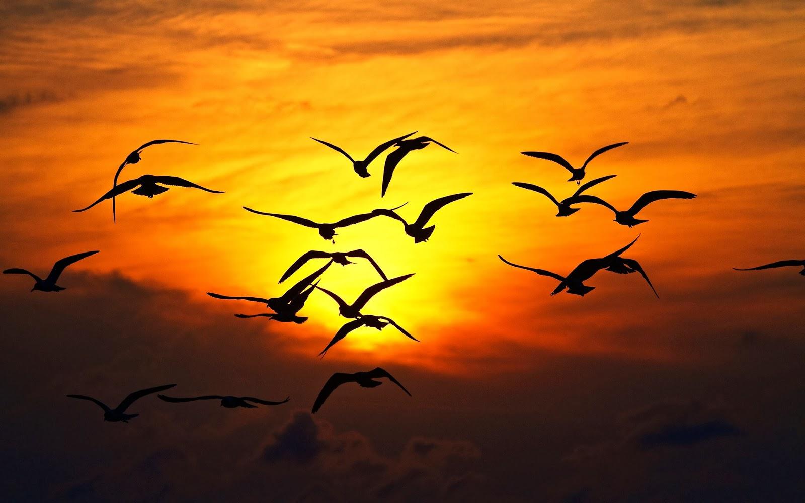صورة صور غروب الشمس , صور غروب رومانسيه جدا