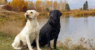 صوره صور الكلاب , لمحبي الكلاب فقط