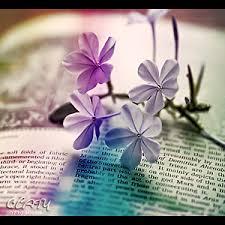 بالصور رمزيات ورد انستقرام , اروع رمزيات الورود لانستقرام 8954 6