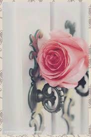 بالصور رمزيات ورد انستقرام , اروع رمزيات الورود لانستقرام 8954 8
