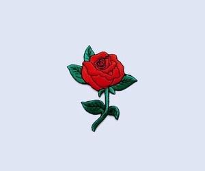 صوره رمزيات ورد انستقرام , اروع رمزيات الورود لانستقرام