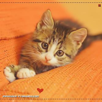 بالصور رمزيات قطط تجنن , اجمل رمزيات القطط جديد 9278 1