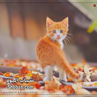 بالصور رمزيات قطط تجنن , اجمل رمزيات القطط جديد 9278 2