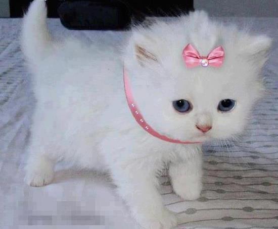 بالصور رمزيات قطط تجنن , اجمل رمزيات القطط جديد 9278 3