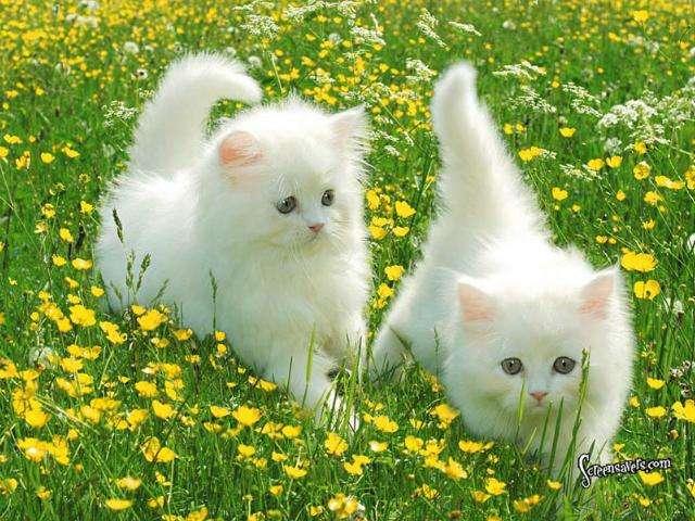 بالصور رمزيات قطط تجنن , اجمل رمزيات القطط جديد 9278 4