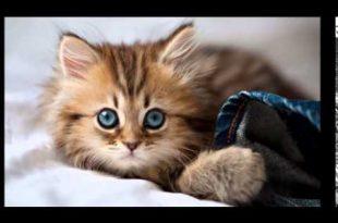 صور رمزيات قطط تجنن , اجمل رمزيات القطط جديد