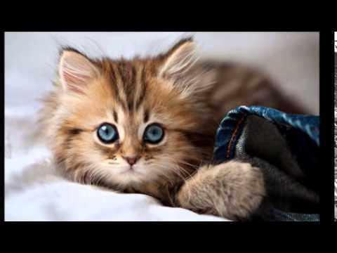 بالصور رمزيات قطط تجنن , اجمل رمزيات القطط جديد 9278