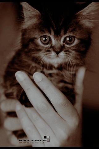 صوره رمزيات قطط تجنن , اجمل رمزيات القطط جديد