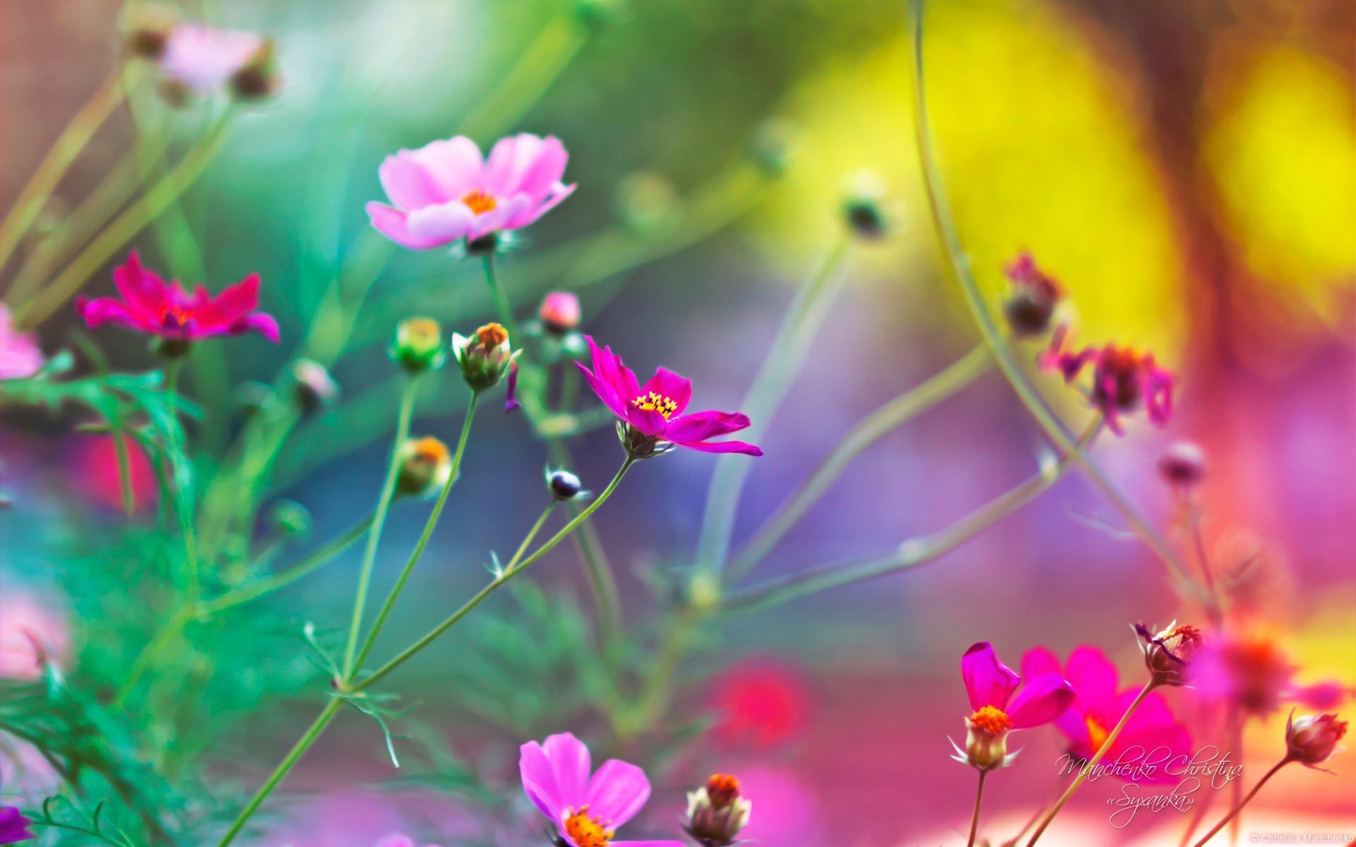 صوره خلفيات ورود روعة , خلفيات الورد الجميلة