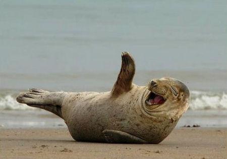 بالصور احلى الصور المضحكه , اجمل صور مضحكة 9526 9