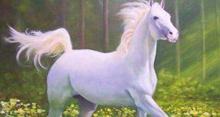 صورة اجمل خيل في العالم , الخيول البيضاء الجميلة