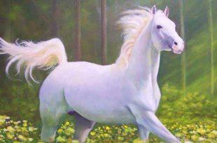 صوره اجمل خيل في العالم , الخيول البيضاء الجميلة