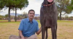 صوره اكبر كلاب العالم , اضخم الكلاب في العالم