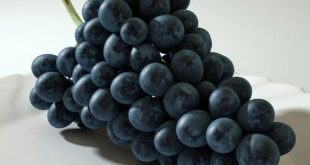 صورة فوائد العنب الاسود , اهمية تناول العنب الاسود 4347 2 310x165