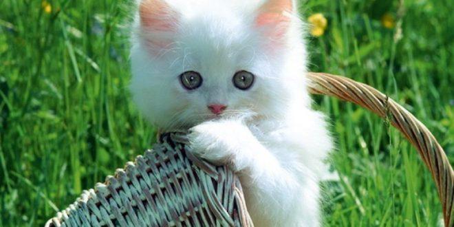 بالصور صور قطط جميلة , القطط وجمالها وشقاوتها 9099 9 660x330