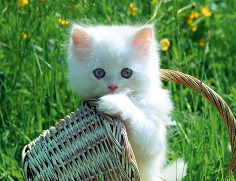 صورة صور قطط جميلة , القطط وجمالها وشقاوتها