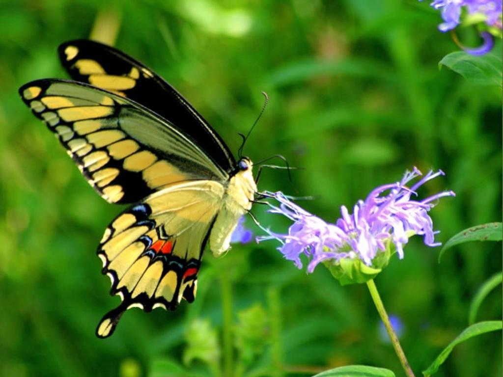 بالصور صور طبيعة جميلة , اروع صور من الطبيعه 9287 5