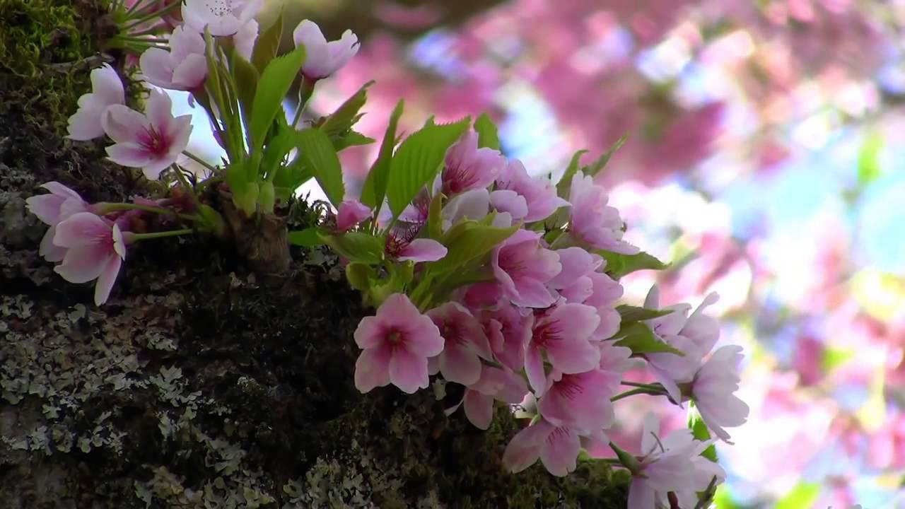 بالصور صور طبيعة جميلة , اروع صور من الطبيعه 9287 6