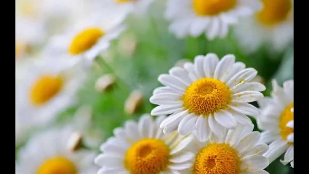 بالصور صور طبيعة جميلة , اروع صور من الطبيعه 9287 8