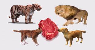 صورة الغذاء عند الحيوان, كيف يستمد الحيوانات طاقتهم