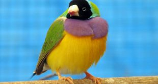صورة اجمل الطيور في العالم, أروع الطيور في العالم التي تعيش في الغابات
