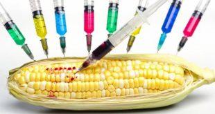 صورة الغذاء المعدل وراثيا, الإيجابيات والسلبيات للمعدل وراثيا من الغذاء